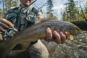 Brown Trout vs Brook Trout: What's the Difference?